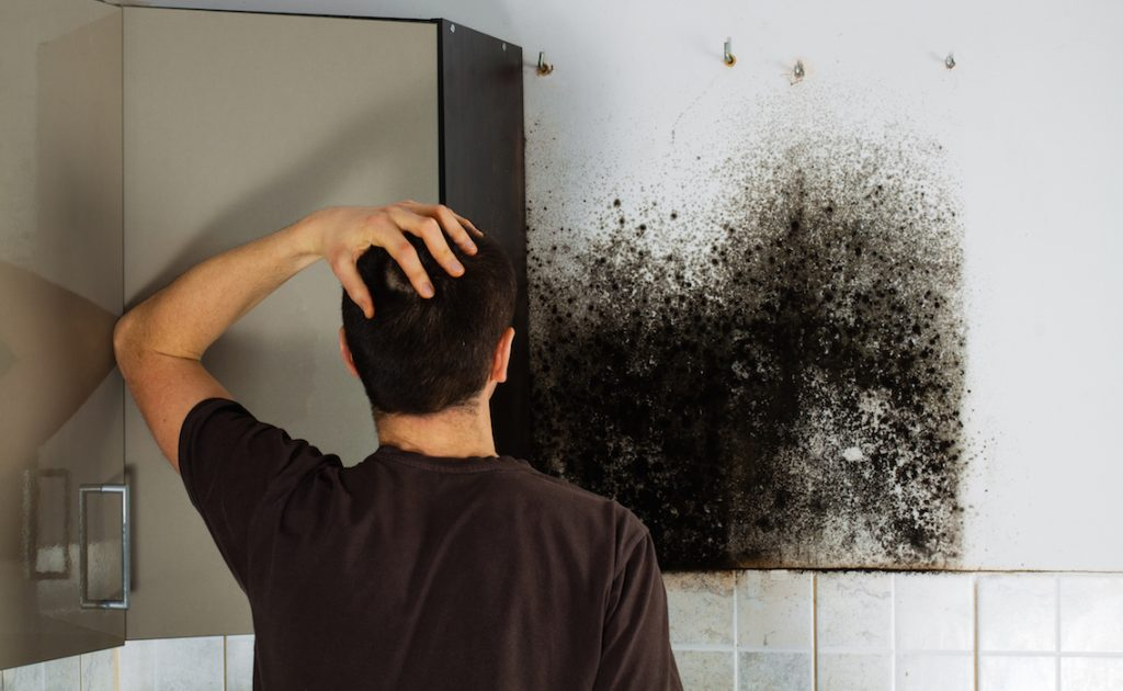 diy mold removal - problem in home